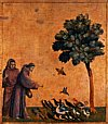 St. Assisi And Birds