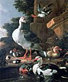 Classical Waterfowl